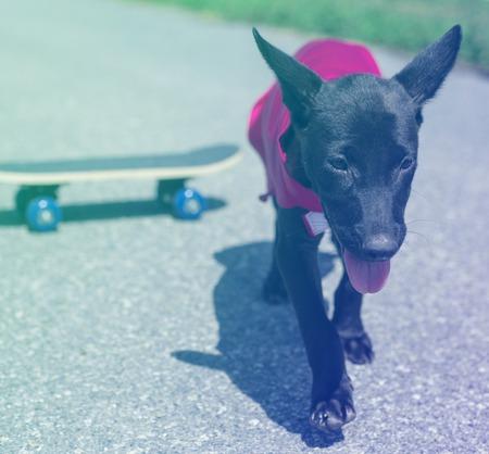 スーパー ヒーローの衣装の流行に敏感なストリート犬 写真素材
