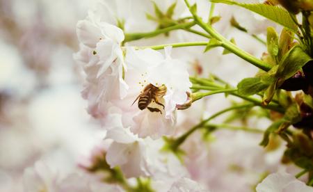 美しい花蜂 Widlife ライフ スタイル自然