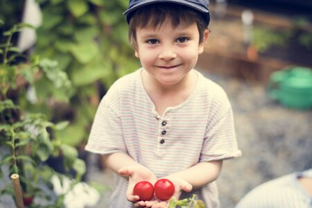 Little boy with handful of organic fresh agricultural tomato Reklamní fotografie