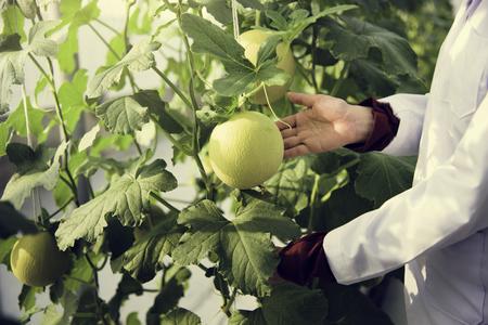 Botanist holding a fruit