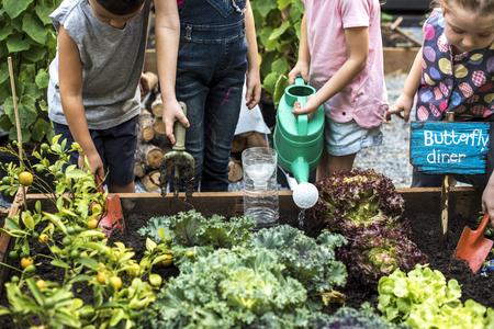 Kinderen planten de planten in de tuin