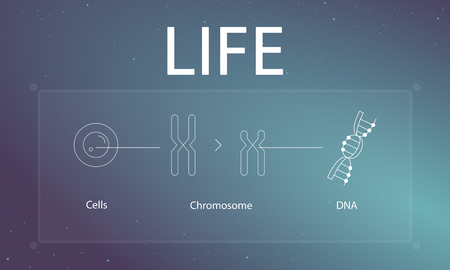 Cells DNA and chromosome in the frame graphics