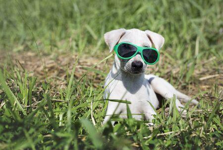 犬サングラス犬種ペット挨拶