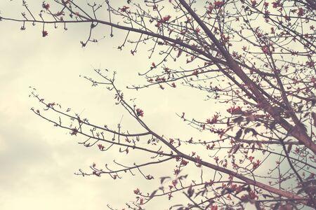 cloudscape 및 가을 시즌에 자연의 사진 스톡 콘텐츠