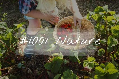 100% Nature Organic Freshly Picked Healthy Eating Stockfoto