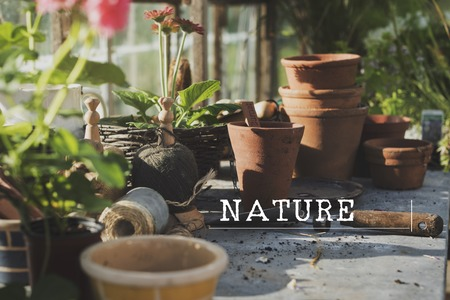 Planting Gardening Hobby Leisure Environment