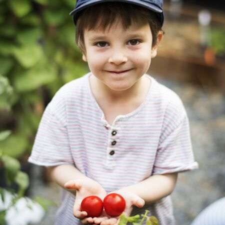 Little boy with handful of organic fresh agricultural tomato Stok Fotoğraf