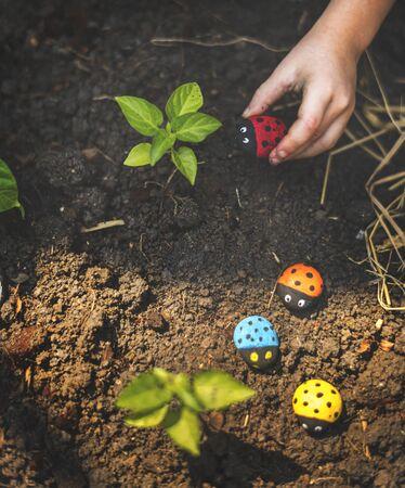 Hand Holding Ladybugs Rock on Planting Area