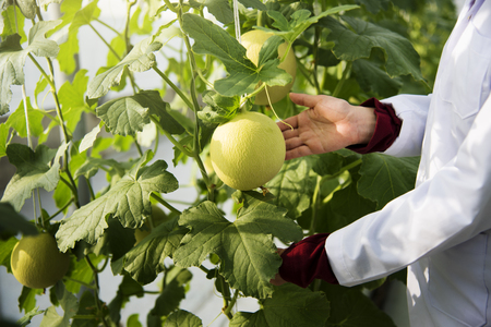 Scientist studying plant fruits Stock Photo