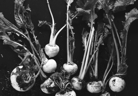 Close-up turnips photo in black and white