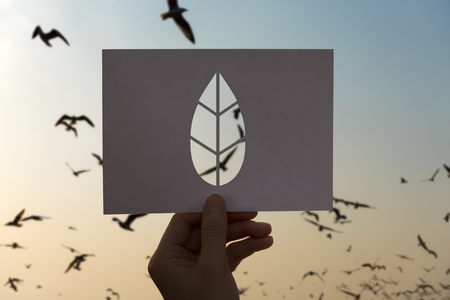 세계 생태 환경 보전 종이 잎 잎 저장 스톡 콘텐츠