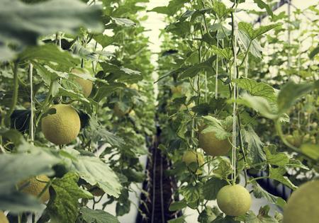 有機甘露収穫自然観察園