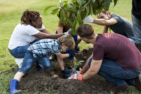 Group of people plant a tree together outdoors Фото со стока