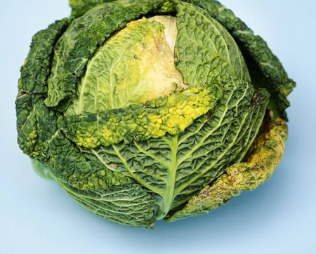 Fresh green cabbage isolated on background Stock Photo