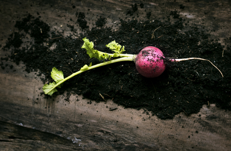 Turnips and soil on a wood Stock Photo