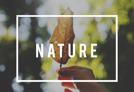 Save earth nature word on leaf background Stok Fotoğraf