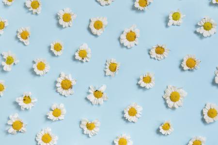 파란색 배경에 흰색 데이지 꽃