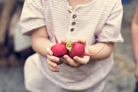 Kleine jongen met handvol organische verse agrarische radijs