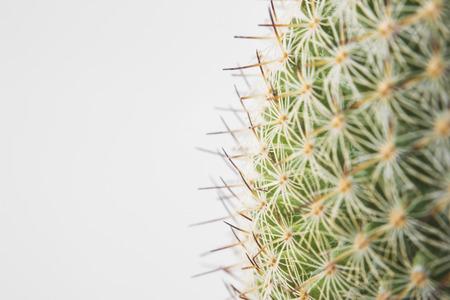 Cactus Spikes Nature Houseplant Background