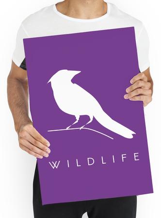 Animal Wildlife Word with Bird Graphic Stock Photo