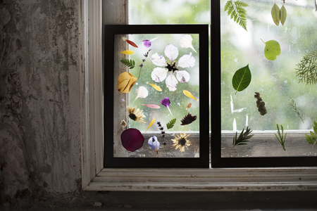 Foliage and pressed flower in a transparent frame Фото со стока - 82066230