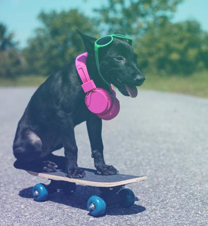 Hipster street dog on the skateboard Stok Fotoğraf
