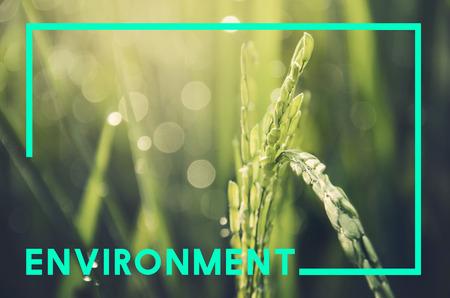 Nature Ecology Natural Environment Concept