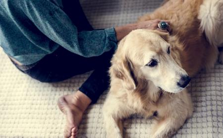 Woman Petting Goldent Retriever Dog