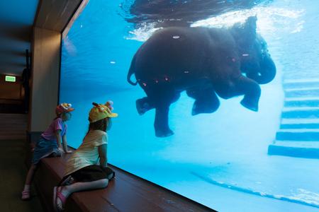 Kids enjoying watching elephant swim in the water tank Stock Photo - 82255787