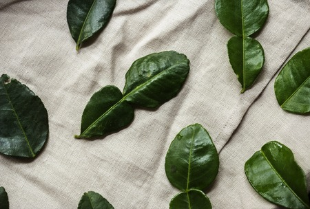 Bergamot leaf on a hemp