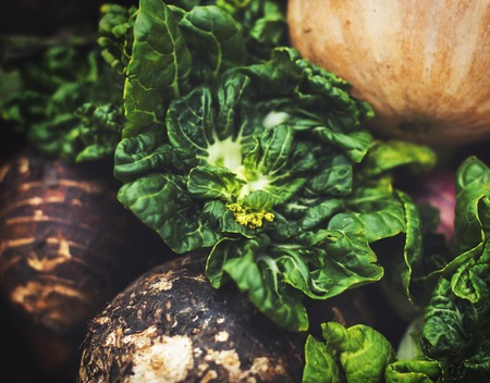 Natural organic variety fresh vegetable