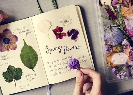 Book with dry flower collection vinatge 版權商用圖片