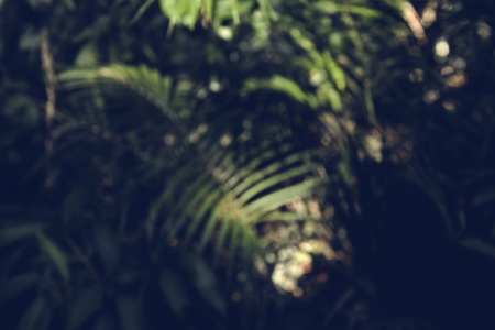Green Forest Jungle Wood Natural 版權商用圖片