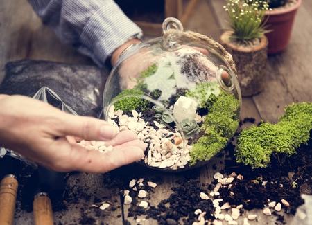 植物環境緑の陶器の自然