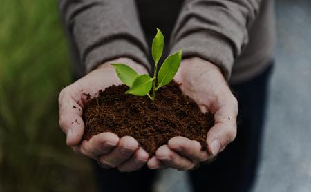 환경 보존 식물 지속 가능성