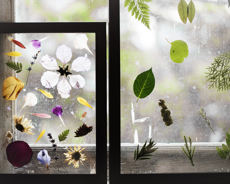 Foliage and pressed flower in a transparent frame Фото со стока - 83020651