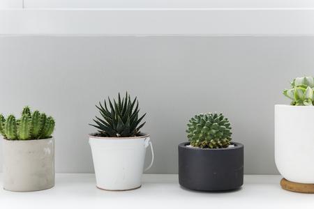 Cactus kamerplant versieren minimale stijl