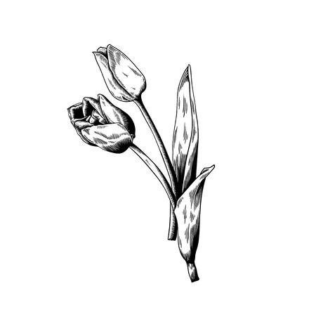 チューリップ白地花自然ベクター アイコンを描画