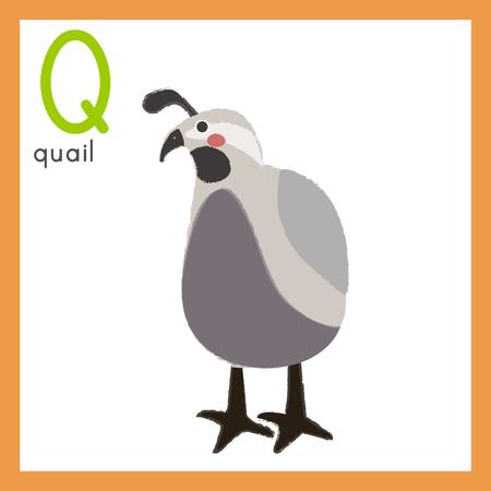 Illustratiestijl Alfabet leren voor kinderen - Alfabet Q