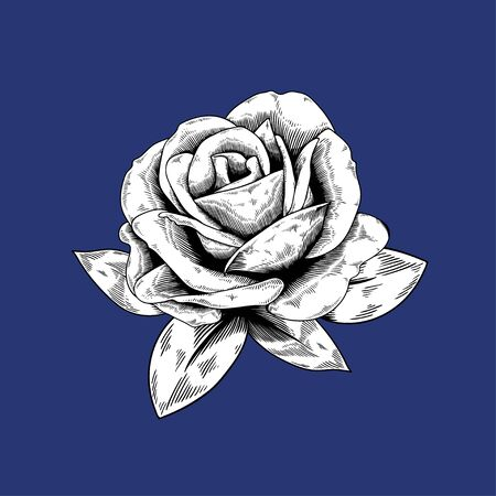 Rose drawing flower nature vector icon on blue background