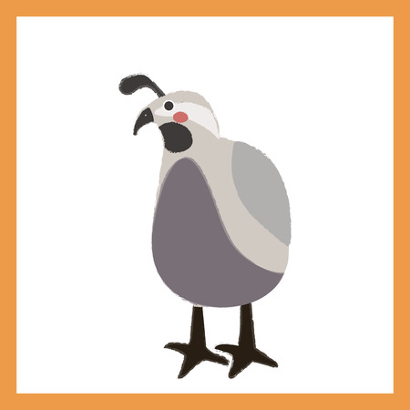 Illustration style of wildlife - Quail.