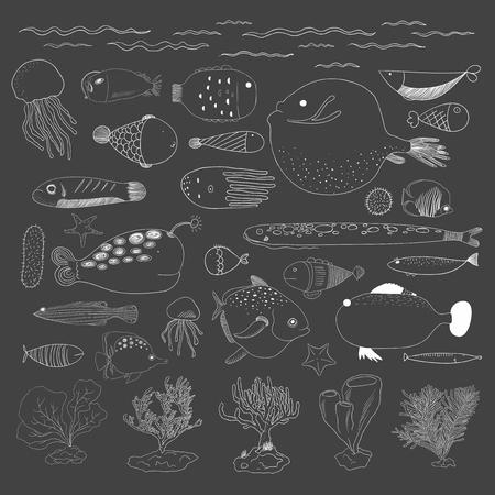 水中生物のベクトル
