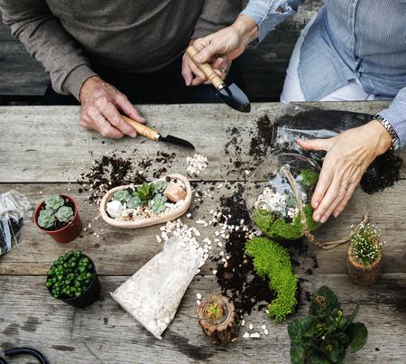 ミニチュア植物でテラリウムを作るカップル