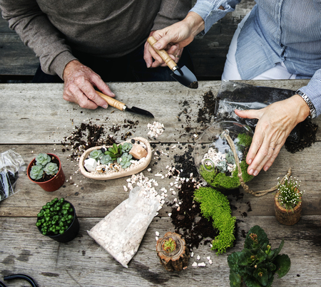 Couple making a terrarium with miniature plants