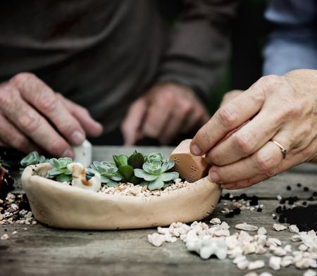 手はミニチュア植物とテラリウムを作る