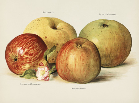 The fruit growers guide  : Vintage illustration of apple Stock fotó