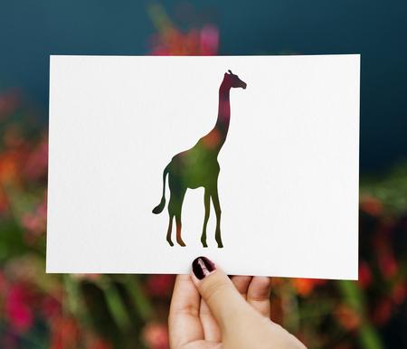 Knip uit een giraf