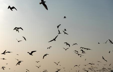 Vliegende zeemeeuwen in de hemel