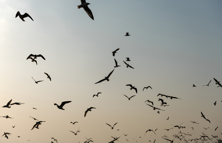 Flying seagulls in the sky