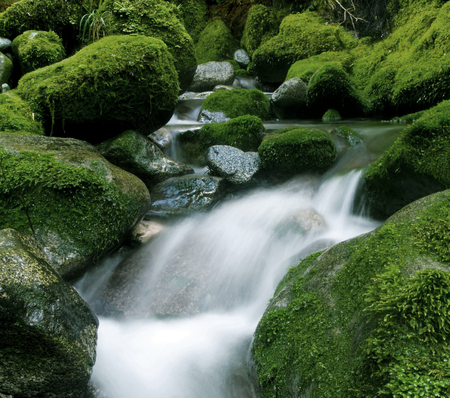 peaceful nature stream new zealand stock photo picture and